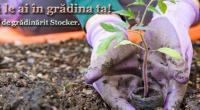 produse de grădinărit